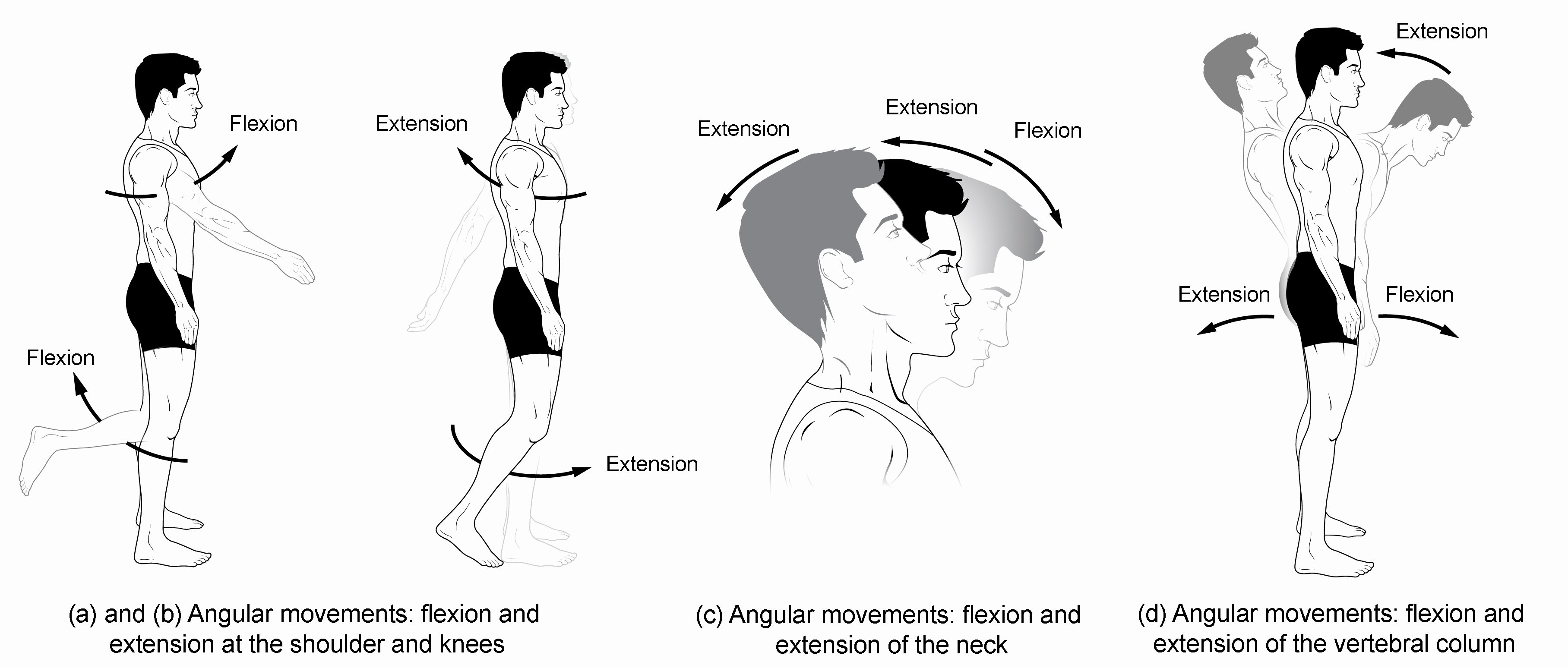 Joints and Movement Worksheet Unique Types Of Body Movements