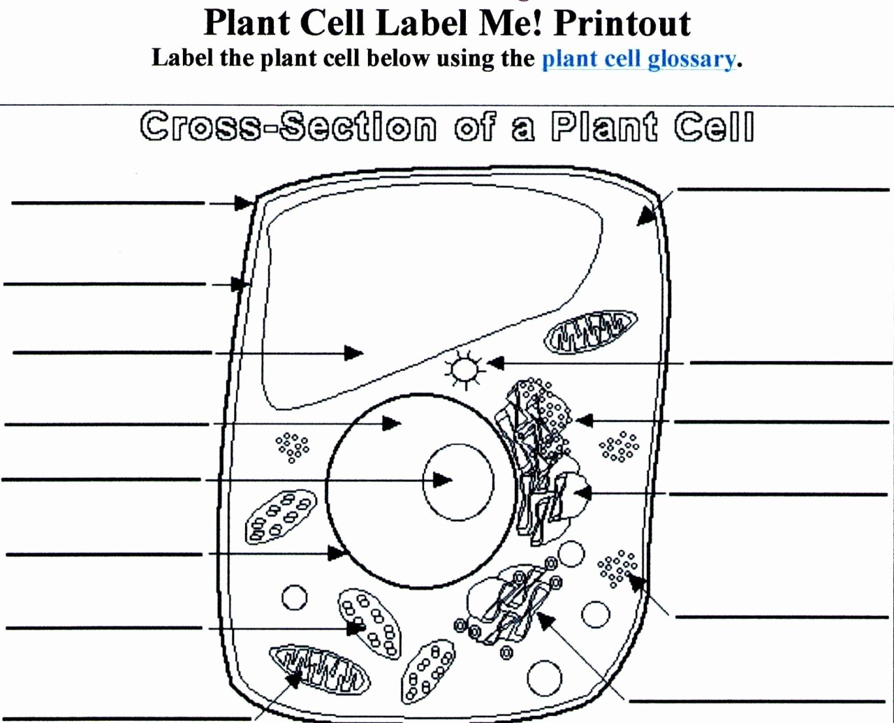 Label Plant Cell Worksheet Best Of Worksheets Blank Plant Cell Worksheet