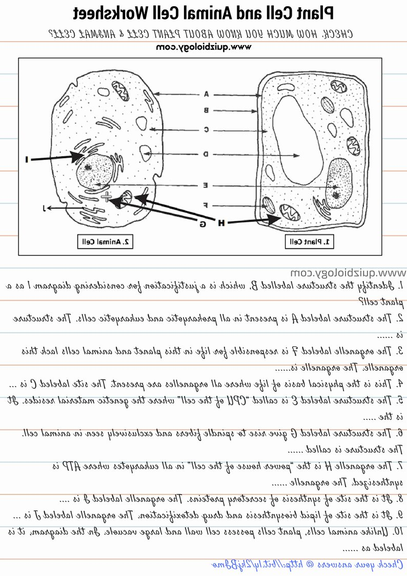 Label Plant Cell Worksheet Elegant Label Plant and Animal Cell Worksheet the Best Worksheets
