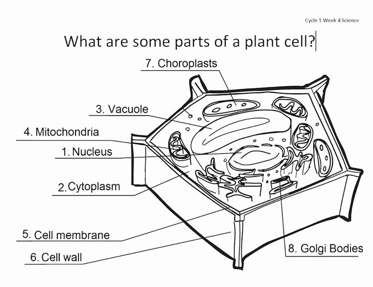 Label Plant Cell Worksheet Fresh Animal and Plant Cell Anatomy Homeschool