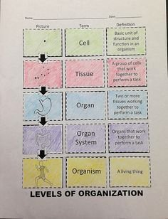 Level Of organization Worksheet Awesome Eukaryotic Cell Structure and Function Chart Google