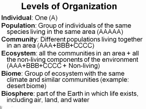 Level Of organization Worksheet Best Of Ecology Levels & Populations