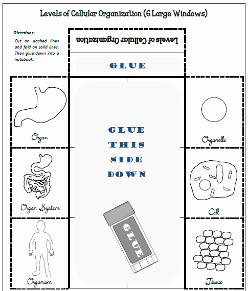 "Level Of organization Worksheet Elegant 6 Large Windows ""the Levels Of Cellular organization"