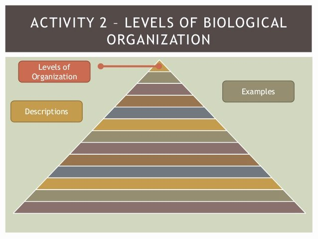 Levels Of Biological organization Worksheet Beautiful Levels Of organization