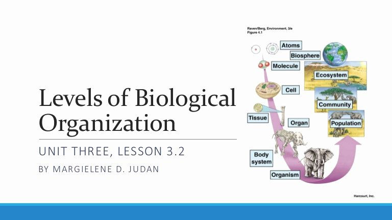 Levels Of Biological organization Worksheet Best Of Unit 3 Lesson 3 2 Levels Of Biological organization