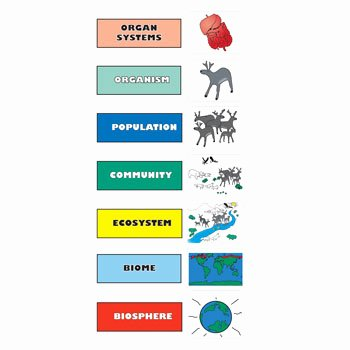Levels Of Biological organization Worksheet Fresh Hands Magnetic Board Kits for Learning Biology