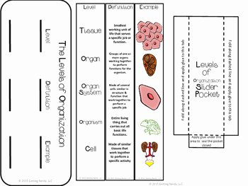 Levels Of Biological organization Worksheet Fresh Levels Of organization Science Interactive Notebook