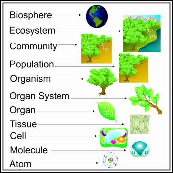 Levels Of Biological organization Worksheet Inspirational Plant S Biological Levels organization by Studio
