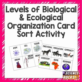 Levels Of Biological organization Worksheet Lovely Levels Of organization Card sort Activity by Science Rocks