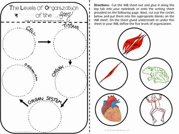 Levels Of Biological organization Worksheet Lovely Levels Of organization Science Interactive Notebook