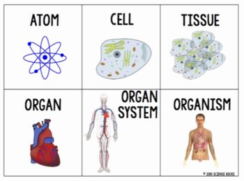 Levels Of Biological organization Worksheet New Levels Of organization Card sort Activity by Science