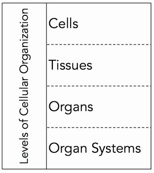 Levels Of Biological organization Worksheet Unique Levels Of Cellular organization Graphic organizer by the
