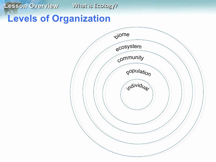 Levels Of Ecological organization Worksheet Best Of Miller Section 3 1 Intro to Ecology
