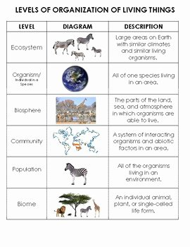 Levels Of Ecological organization Worksheet Elegant Ecology Levels Of organization sort organism to Biosphere