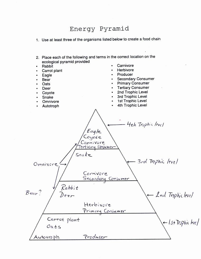 Levels Of Ecological organization Worksheet Elegant Energy Flow In An Ecosystem Worksheet Answers Biozone