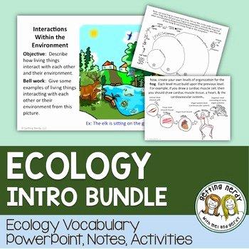 Levels Of Ecological organization Worksheet Fresh Ecosystem Levels Of organization by Getting Nerdy with Mel