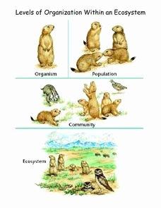 Levels Of Ecological organization Worksheet Fresh Levels Of organization within An Ecosystem 5th 10th