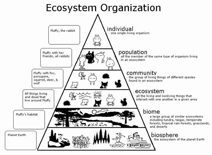 Levels Of Ecological organization Worksheet Inspirational Diversity and Adaptation Among Living Things