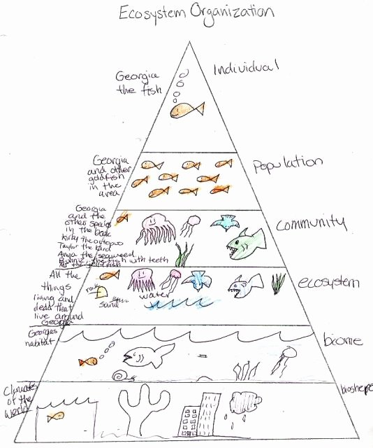 Levels Of Ecological organization Worksheet Lovely 2017 2018 Cdb 3 Study Guide