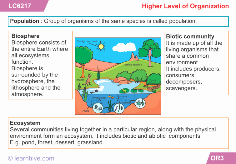 Levels Of Ecological organization Worksheet Lovely 57 Levels organization Worksheet Levels