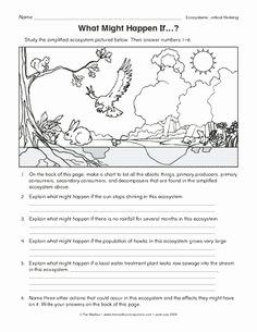 Levels Of Ecological organization Worksheet Lovely Ecological Pyramid Worksheet Energy Pyramid Worksheets