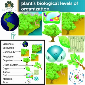 Levels Of Ecological organization Worksheet Lovely Plant S Biological Levels organization by Studio