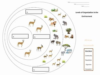"Levels Of Ecological organization Worksheet Lovely ""levels Of organization In the Environment"" Graphic"