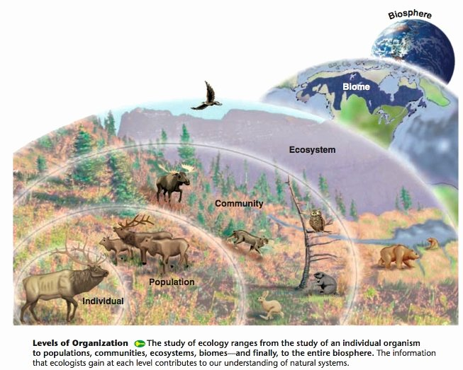 Levels Of Ecological organization Worksheet Luxury From A Flatland Metaphysics to the Ecology Of the Gods