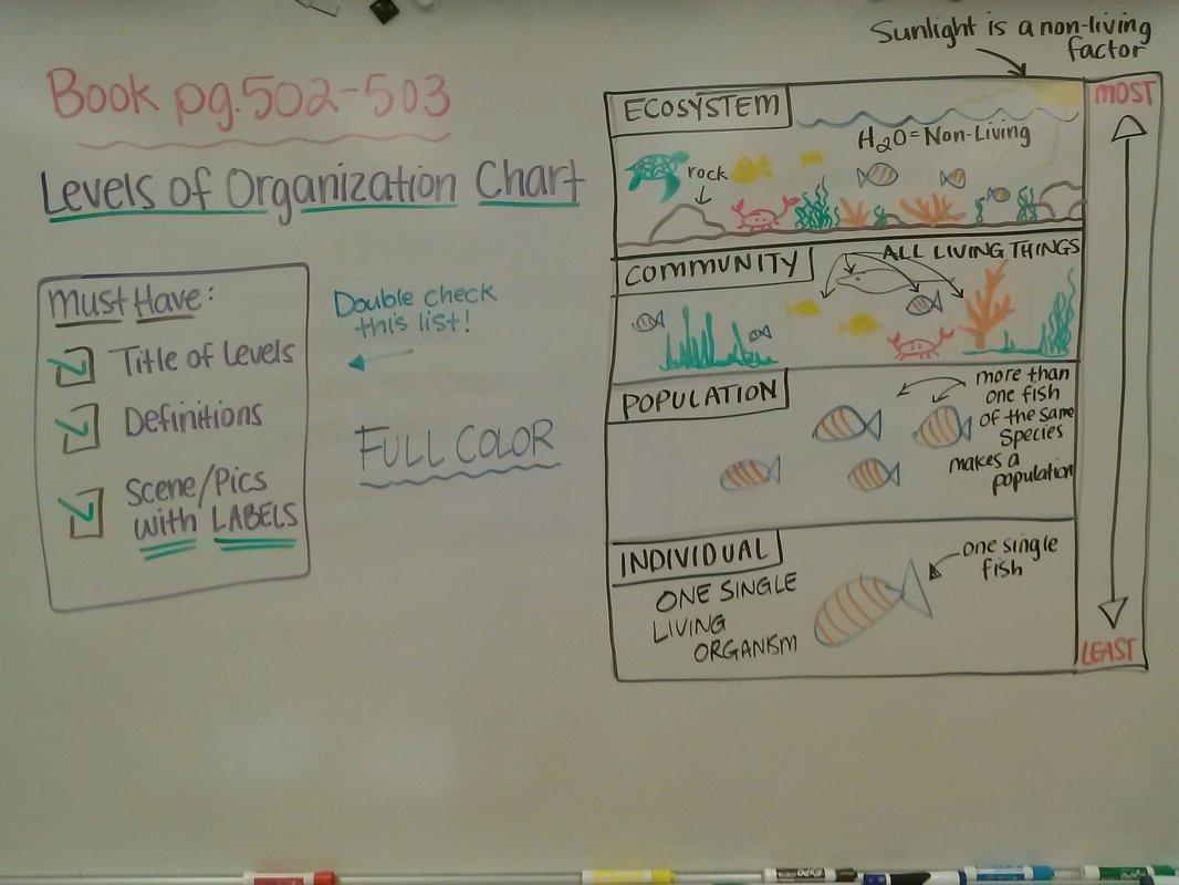 Levels Of Ecological organization Worksheet Luxury Last Year S Lessons Unit 10 Ecology Mrs Dixon S