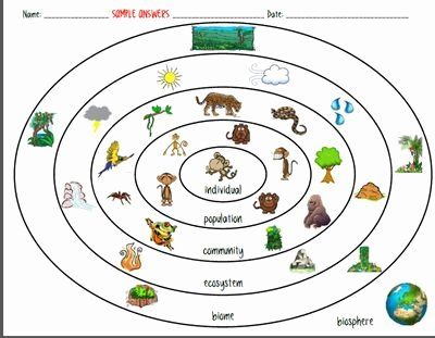 Levels Of Ecological organization Worksheet New Ecosystem organization Levels Of the Environment Biotic