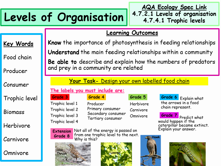 Levels Of Ecological organization Worksheet New New Aqa Ecology Spec Food Chains Levels Of organisation