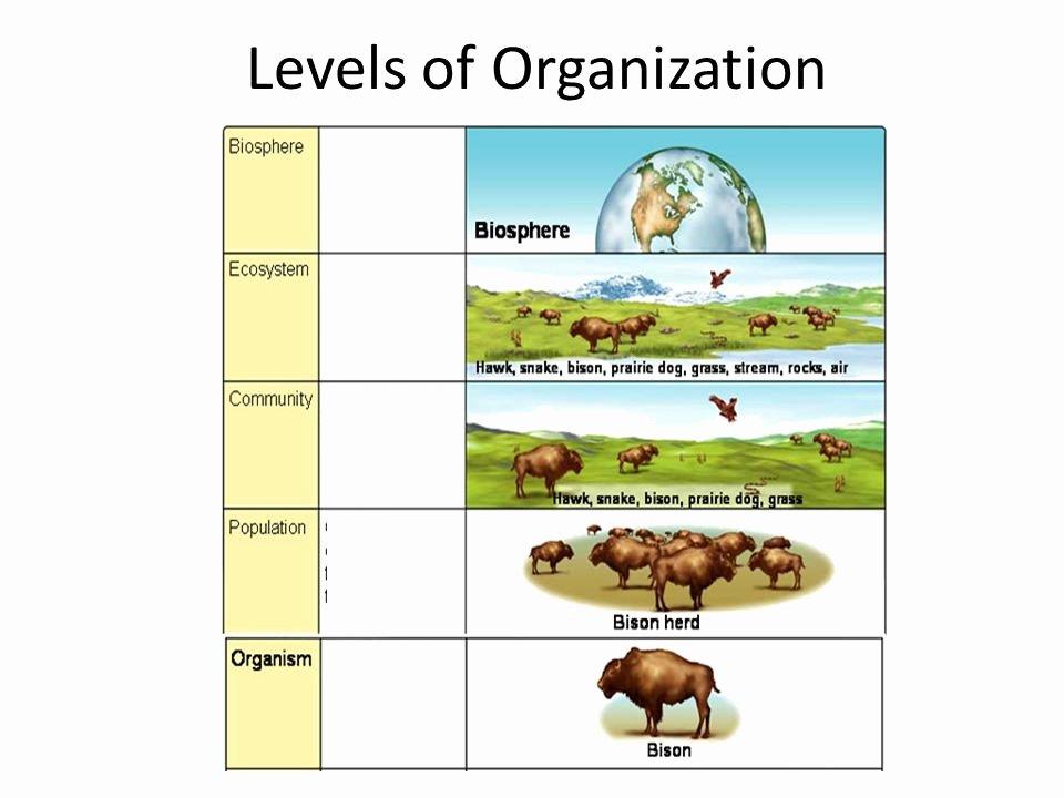 Levels Of Ecological organization Worksheet Unique Ecology Levels organization Worksheet the Best
