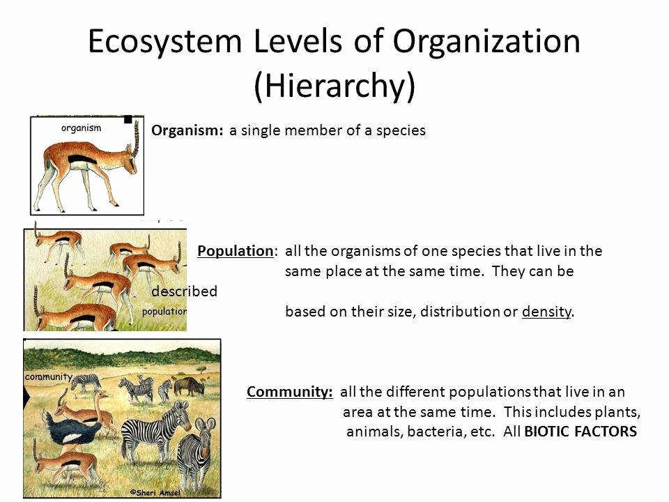 Levels Of Ecological organization Worksheet Unique Levels organization Worksheet