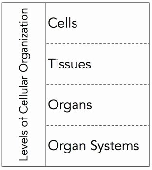 Levels Of organization Worksheet Lovely Levels Of Cellular organization Graphic organizer