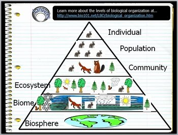 Levels Of organization Worksheet Luxury Ecosystems Levels Of organization Lesson by Science From