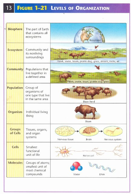 Levels Of organization Worksheet New Levels Of Biological Ecological organization