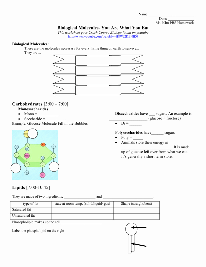 Lipids Worksheet Answer Key Beautiful Biological Molecules You are What You Eat Homework assignment