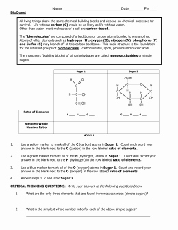 Lipids Worksheet Answer Key Luxury Carbohydrate Worksheet Answer Key
