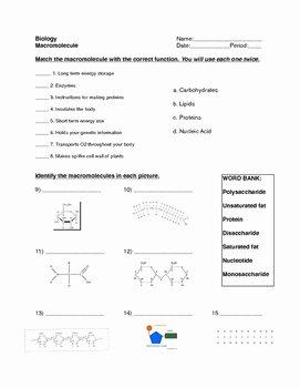Macromolecules Worksheet #2 Answers Elegant Macromolecule Worksheet by for the Love Of Biology
