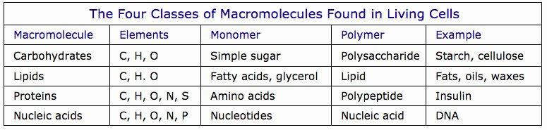 Macromolecules Worksheet High School Awesome Macromolecule Worksheet
