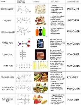 Macromolecules Worksheet High School Beautiful Biomolecules Review Cut & Paste Activity