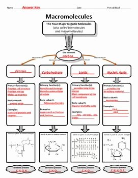 Macromolecules Worksheet High School Elegant Graphic organizer for organic or Macromolecules
