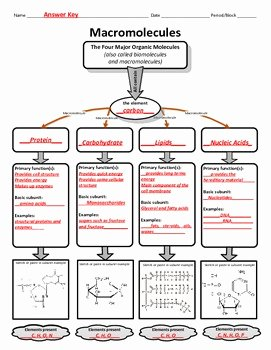 Macromolecules Worksheet High School Fresh Graphic organizer for organic or Macromolecules by