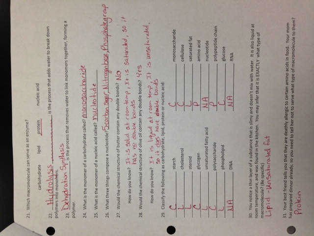 Macromolecules Worksheet High School Fresh Macromolecules Worksheet