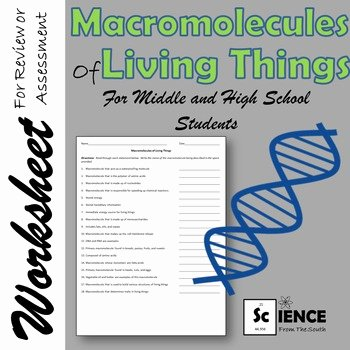 Macromolecules Worksheet High School Luxury Macromolecules Of Living Things Worksheet for Middle and
