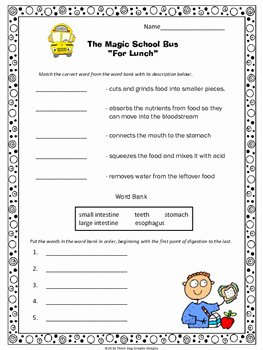"Magic School Bus Worksheet Fresh Digestion Magic School Bus ""for Lunch"" Video Response"