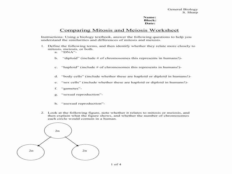Meiosis Matching Worksheet Answer Key Fresh Meiosis Worksheet
