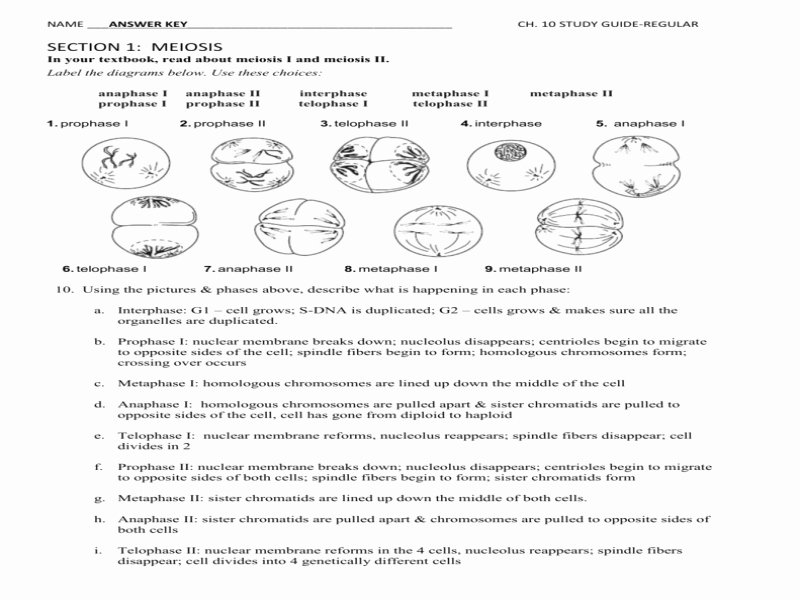 Meiosis Matching Worksheet Answer Key New Chapter 10 Mendel and Meiosis Worksheet Answers Free