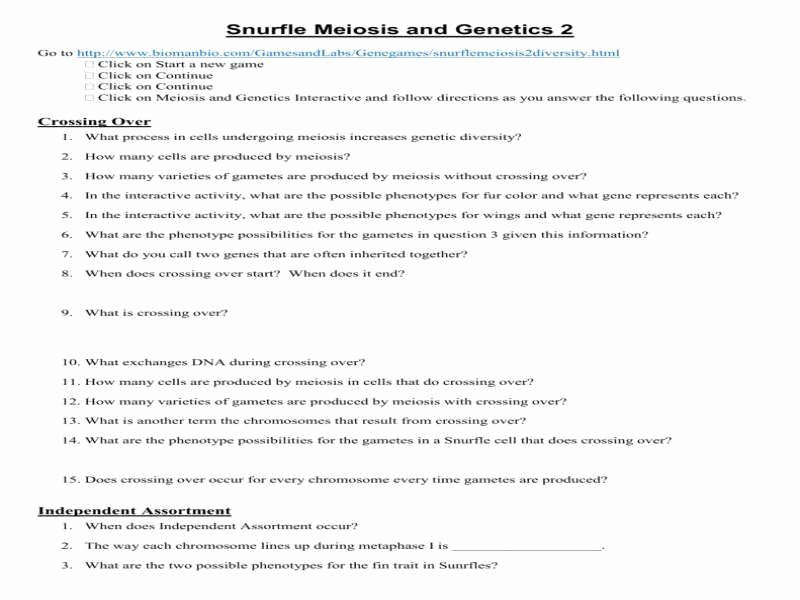 Meiosis Worksheet Vocabulary Answers Inspirational Meiosis Worksheet Answers
