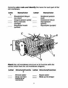 Membrane Structure and Function Worksheet Beautiful Cell Membrane Worksheet by Marta Dabrowska